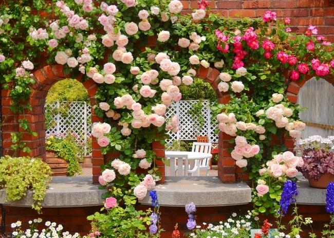 розовый цветник