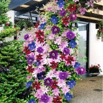 вертикальное озеленение цветы
