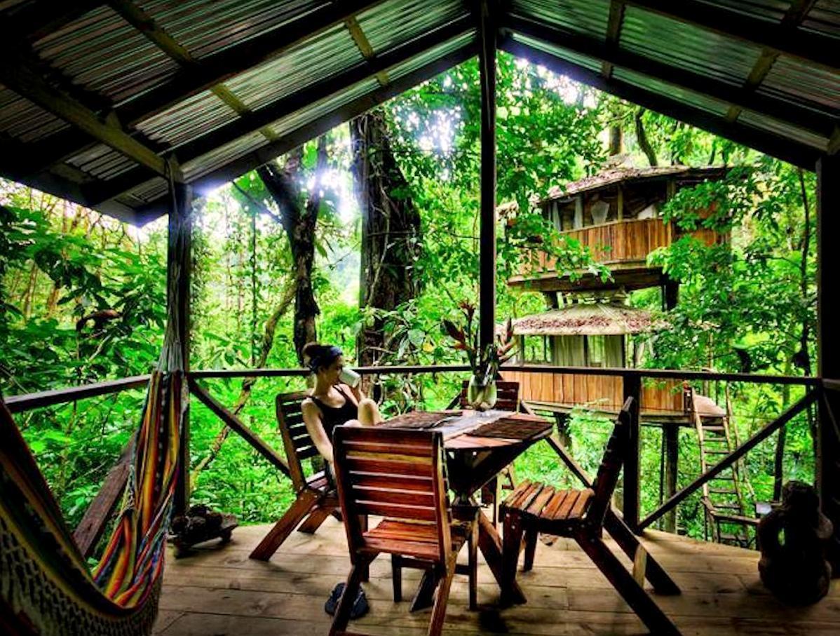 домик в джунглях