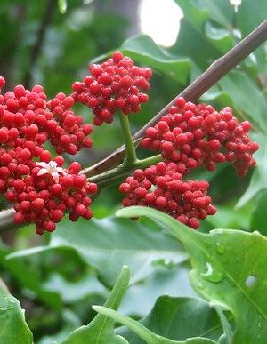 красные цветы лея