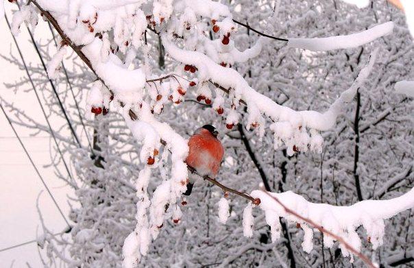 зимний ландшафтный дизайн хитрости