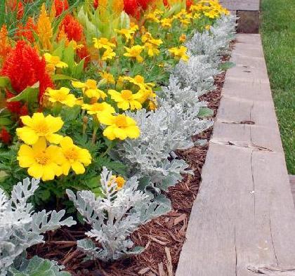 цветы ландшафтный дизайн приучадебного участка