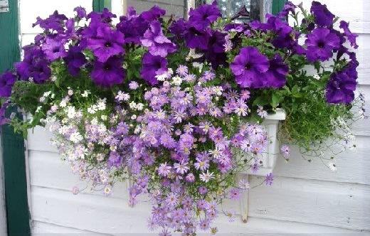 цветы на окнах