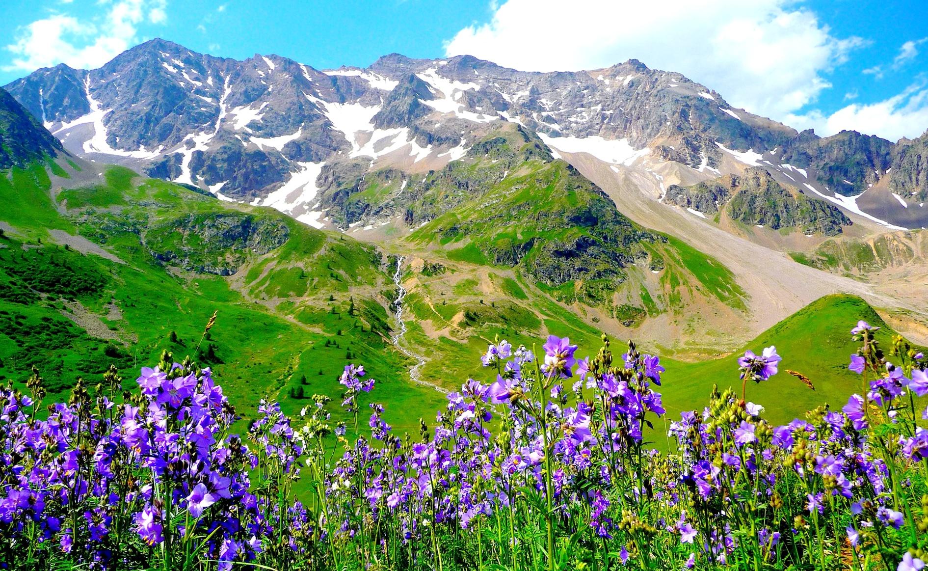 Альпы, цветы