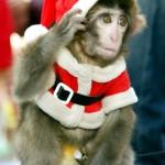 хозяйка года обезьяна