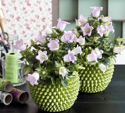 красивые комнтаные цветы