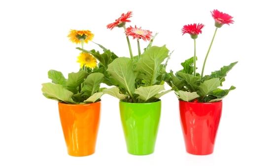 яркие комнатные цветы
