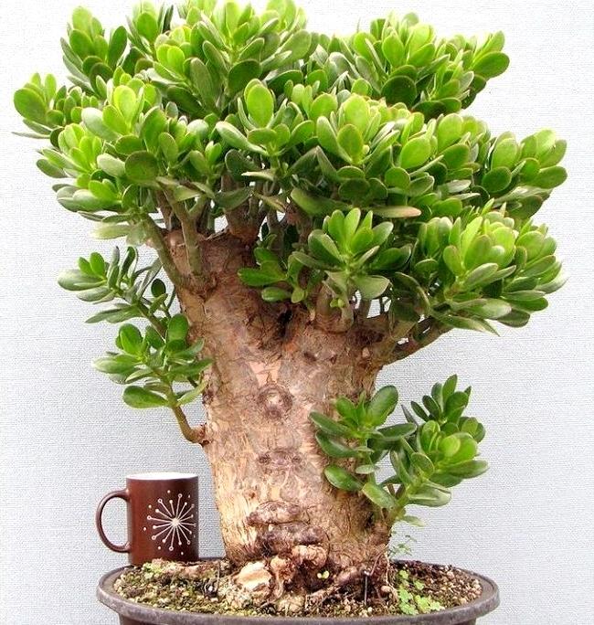 картинки дерево денежное