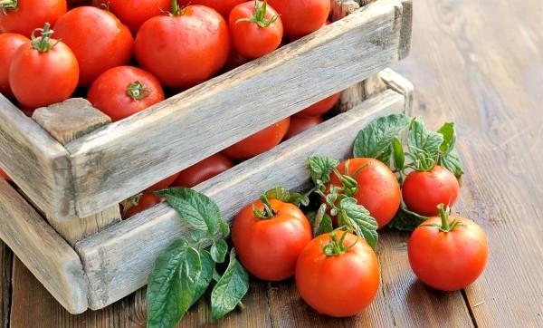 удобрение для рассады помидор дрожжами