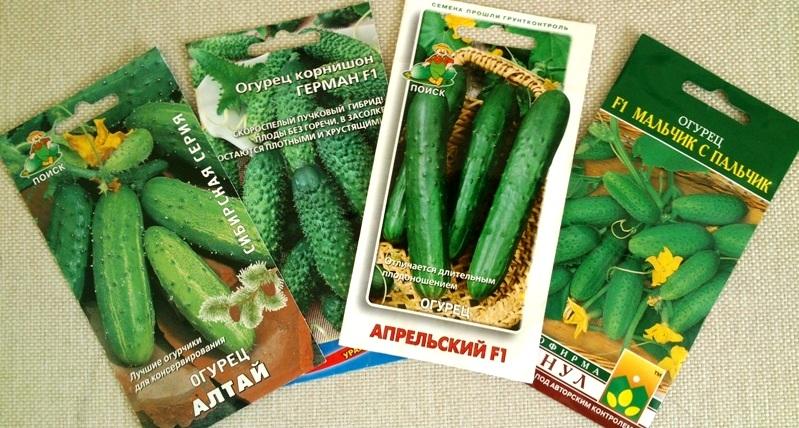 семена огурцов 2