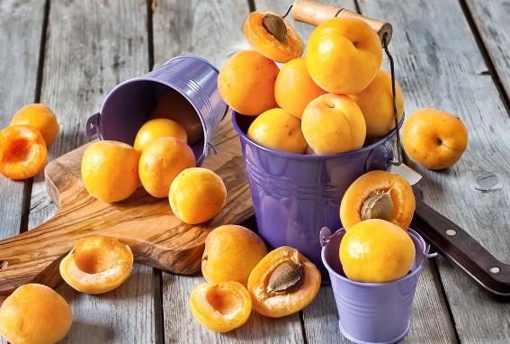как вырастить абрикос из косточки2