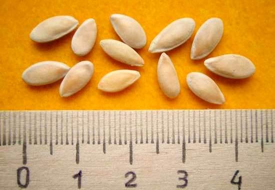 необработанные семена