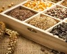 приобретение и заготовка семян