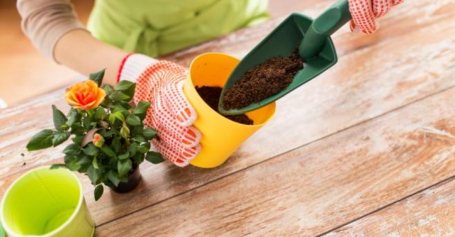 пересадка комнатных растений правильный грунт