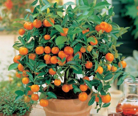 правильный уход за домашними растениями