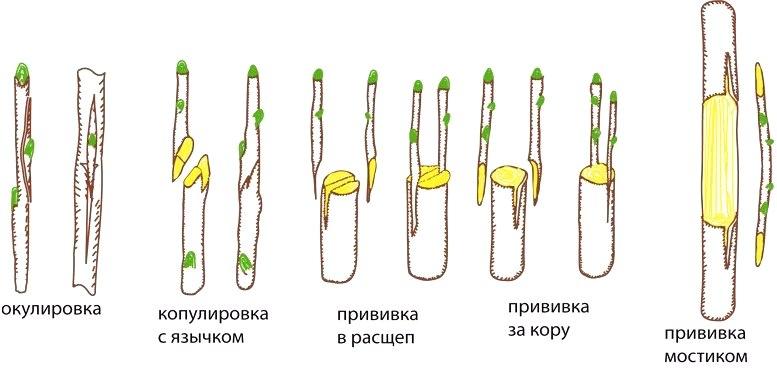 способы прививка деревьев