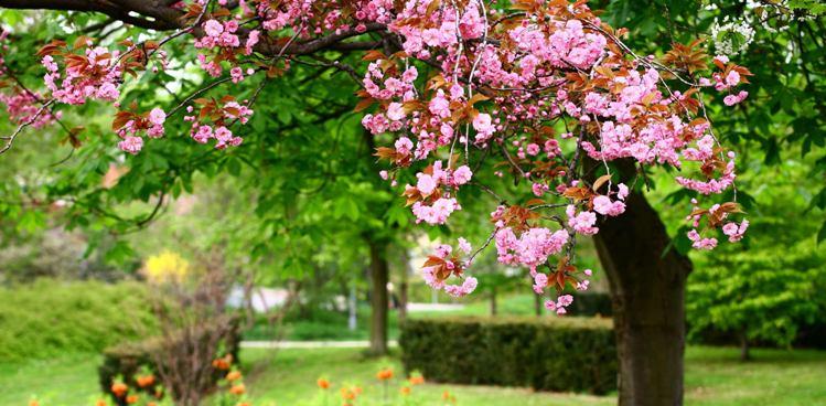 Весенние работы в саду и цветнике