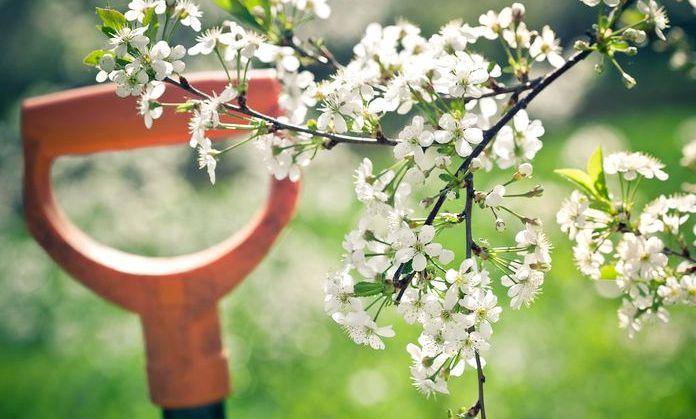 Весенние работы в саду, огороде и цветнике