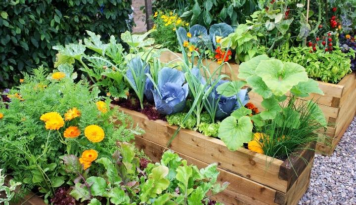 правильно распланировать огород