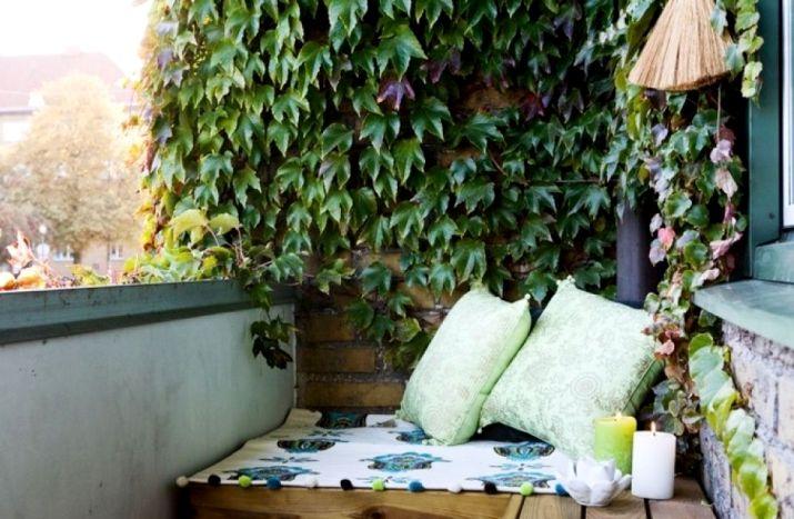 вертикальное озеленение на балконе