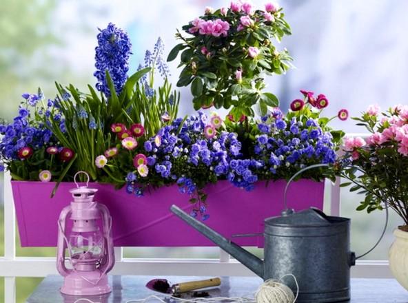 голубые цветы на балконе