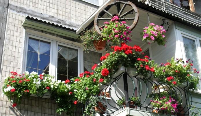 озеленение на балконе